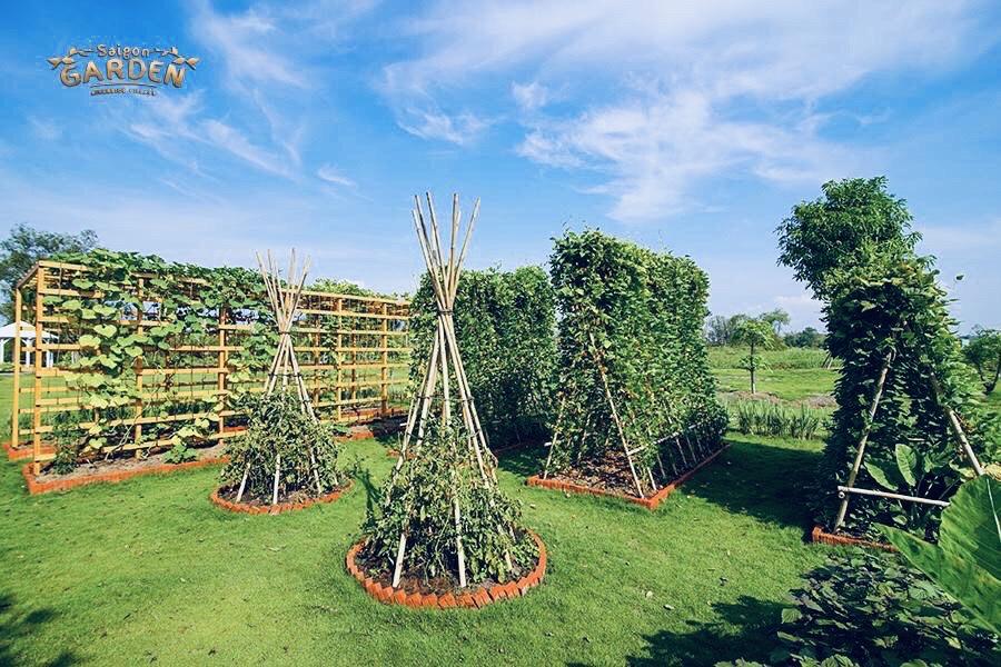 vườn rau tại nhà mẫu dự án